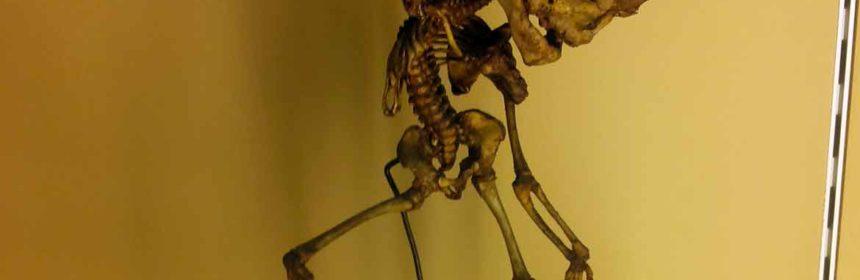 museo delle cere anatomiche bologna