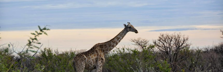 safari all'etosha national park