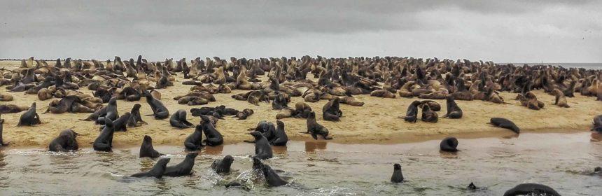 escursione a walvis bay