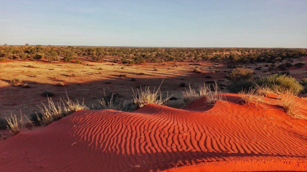 Kalahari. Il deserto nel cuore della Namibia