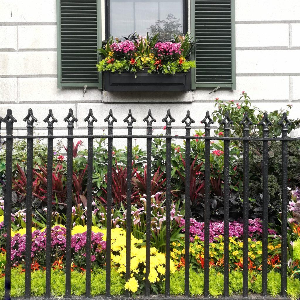 fiori nei giardini del quartiere di beacon hill