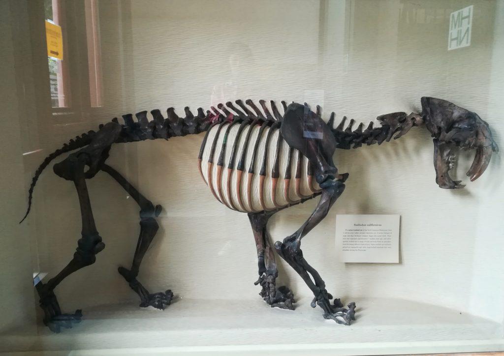 museo storia naturale dinosauri
