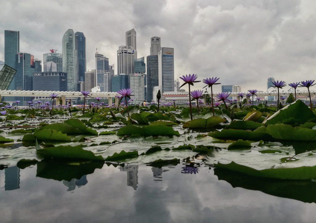visitare singapore viaggio