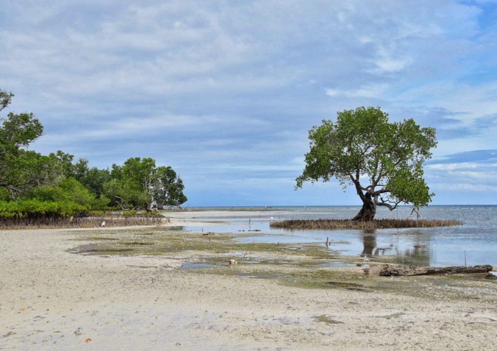 siquijor riserva marina immersioni