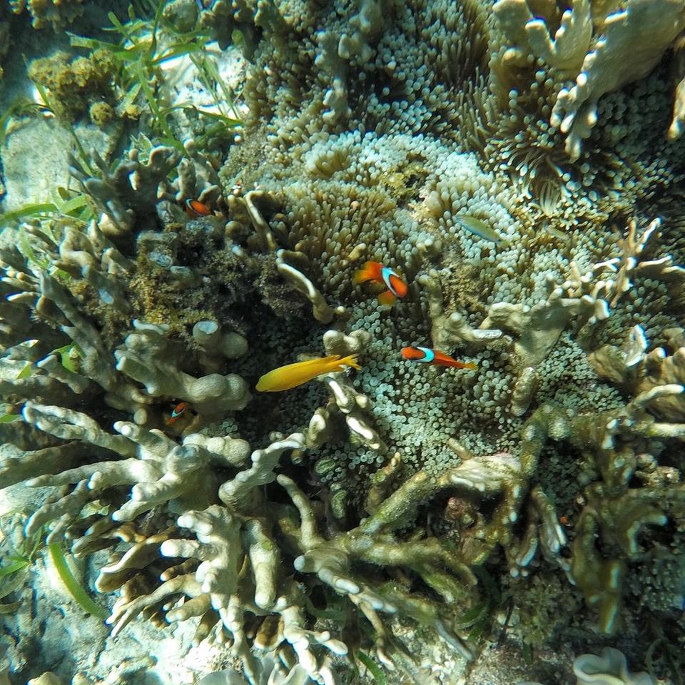 coron immersioni subacquee
