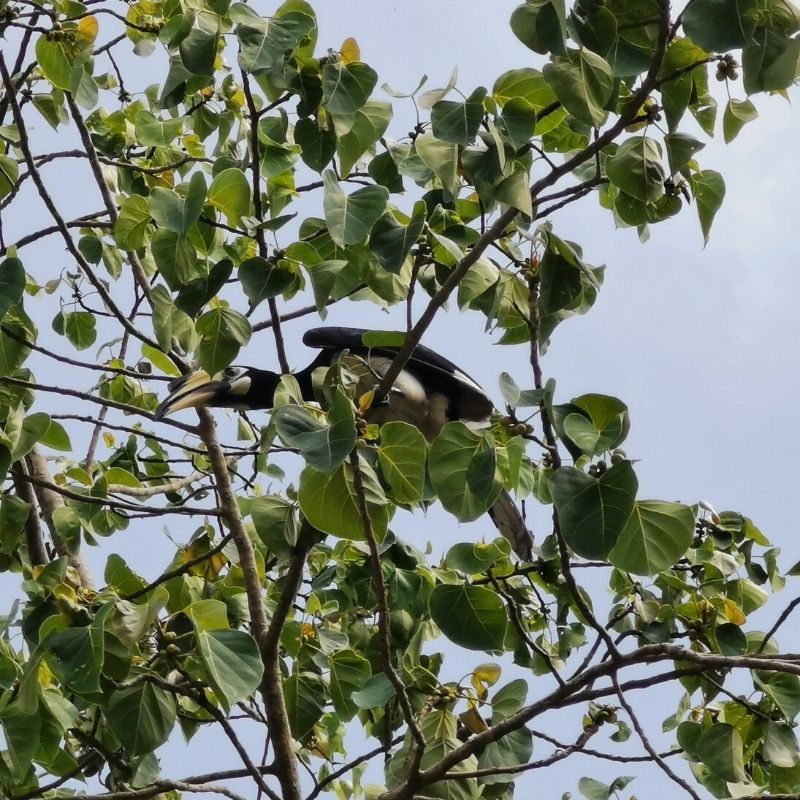 fauna tropicale a koh lanta